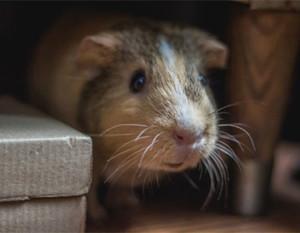 Tiere in Mietwhnungen - Kleintiere sind okay
