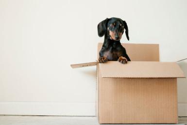 Haustiere in Mietwohnungen - Streit mit dem Vermieter ist häufig