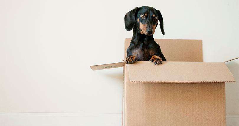 Haustiere in Mietwohnungen